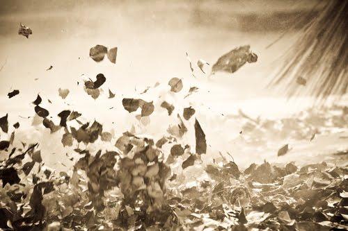 Broom-dry-leaves-storm-fly